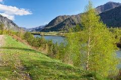 在山村Chemal,俄罗斯附近的阿尔泰河Katun 免版税库存照片