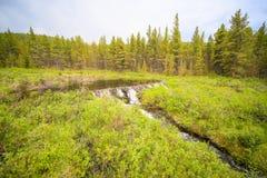 在山森林之间的海狸水坝 免版税库存图片