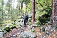 在山森林轨道的旅行 免版税库存图片