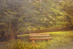 在山毛榉树分支下的长凳 免版税库存图片