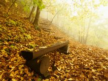 在山毛榉森林,在树下的老被放弃的长凳的秋天有薄雾和晴朗的破晓 在山毛榉分支之间的雾没有叶子 图库摄影