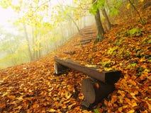 在山毛榉森林,在树下的老被放弃的长凳的秋天有薄雾和晴朗的破晓 在山毛榉分支之间的雾 免版税库存图片
