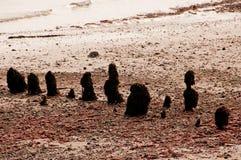 在山毛榉的海洋防御 免版税库存照片