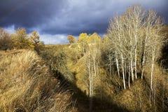 在山沟的树 库存照片