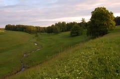 在山沟的森林小河 库存图片