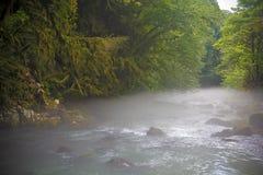 在山河上的早晨雾在绿色森林中间 免版税图库摄影
