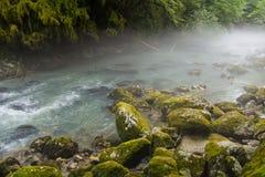 在山河上的早晨雾在绿色森林中间 免版税库存照片