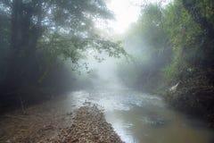 在山河上的早晨雾在绿色森林中间 库存照片