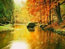 在山河上的秋天五颜六色的森林 水在叶子树下 库存图片