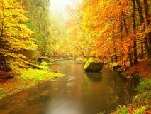 在山河上的秋天五颜六色的森林 水在叶子树下 免版税图库摄影