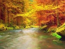 在山河上的秋天五颜六色的森林 水在叶子树下 库存照片