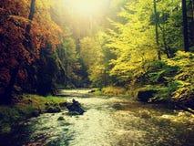 在山河上的秋天五颜六色的森林 水在与橙黄反射的叶子树下 库存照片