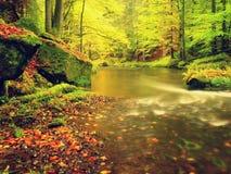 在山河上的秋天五颜六色的森林 水在与橙黄反射的叶子树下 免版税库存照片