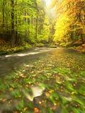 在山河上的秋天五颜六色的森林 水在与橙黄反射的叶子树下 库存图片