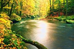 在山河下落的生苔下落的白杨木树 橙色和黄色槭树留下,清楚的水做镜子 库存图片