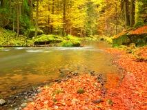 在山河的秋天 低级水,与生动的五颜六色的叶子的石渣 生苔冰砾 库存照片