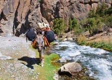 在山河被装载的背包的驴 库存照片