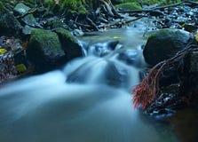在山河水小河,白杨木树被暴露的红色和桃红色柔和的根的玄武岩冰砾。 免版税库存照片
