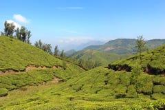 在山泰国的美好的绿色领域 图库摄影