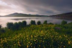 在山湖温暖晴朗的晚上,有绿草和花的 免版税库存图片