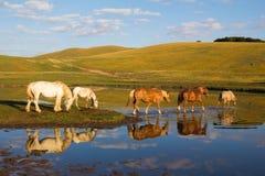 在山湖的马 免版税库存照片