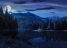 在山湖附近的杉木森林在晚上 免版税库存图片