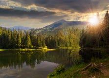 在山湖附近的杉木森林日落的 库存照片