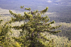 在山的Ð 偏僻的树 库存照片