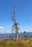 在山的一个停止的结构树 免版税图库摄影