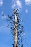 在山的一个停止的结构树 库存照片