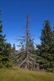在山的一个停止的结构树 库存图片