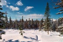 在山的一个温暖的晴天在冬天 免版税库存照片