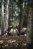 在山的一座桥梁和在亚斯本,科罗拉多附近的秋叶 库存照片