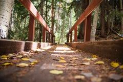 在山的一座桥梁和在亚斯本,科罗拉多附近的秋叶 图库摄影