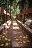 在山的一座桥梁和在亚斯本,科罗拉多附近的秋叶 免版税库存照片