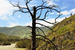 在山的一棵偏僻的树 免版税库存照片