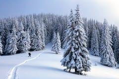 在山的上流人在多雪的领域和森林去在冷的多雪的天 免版税库存照片