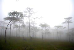 在山的上面的杉树 库存照片