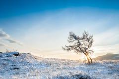 在山的两棵美丽的树在日落 免版税库存图片