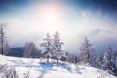 在山的两棵美丽的积雪的树在日落 免版税库存照片