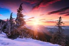 在山的五颜六色的冬天早晨 严重的阴暗天空 积雪的针叶树树看法在日出的 圣诞快乐的 免版税库存照片