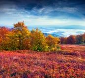 在山的五颜六色的秋天风景 免版税库存照片