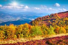 在山的五颜六色的秋天风景 免版税图库摄影
