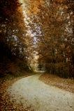 在山的五颜六色的秋天 免版税库存照片