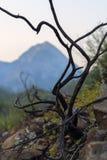 在山的倾斜的植被 并且灌木分支在火以后烧了 库存图片