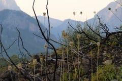 在山的倾斜的植被 并且灌木分支在火以后烧了 库存照片