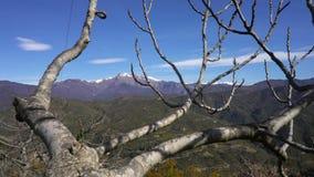 在山的偏僻的不生叶的树 股票录像