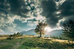 在山的偏僻的树在日落 免版税库存图片