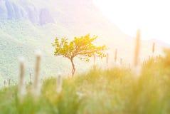 在山的偏僻的树在明亮的太阳期间 库存图片