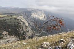 在山的偏僻的树用明亮的红色莓果 免版税库存图片